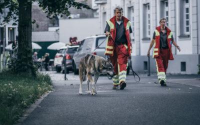 Helfer und Hundeführer gesucht!