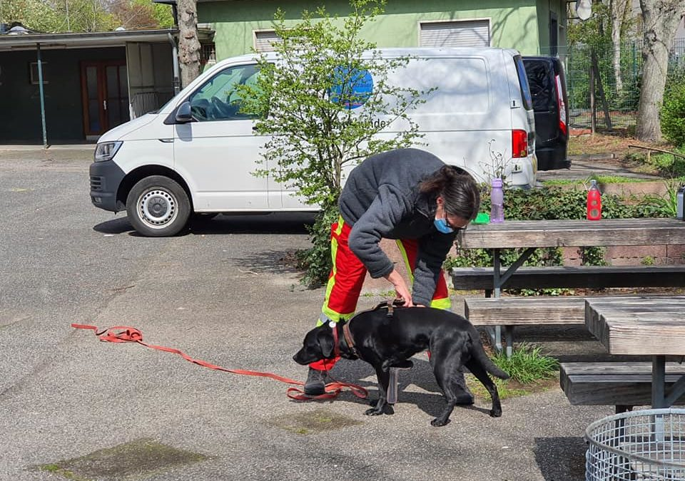 Rettungshunde-Vorführung
